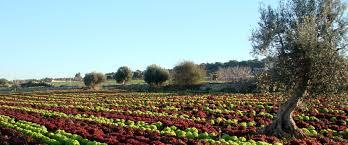 Ministero delle Politiche Agricole, Alimentari e Forestali: bando per la promozione di prodotti sul mercato interno