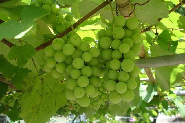 Il 17 febbraio La giornata della qualità agroalimentare