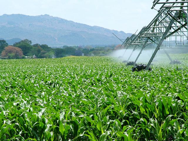Guida per partecipare ai fondi sull'agricoltura