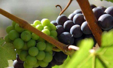 Il wine-day di Alibaba premia Mezzacorona