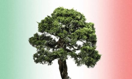 Conserve Italia 40 anni di cooperazione
